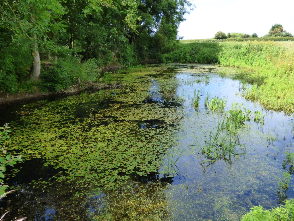 A restored pond, near Bodham, upper Glaven.